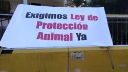 Defensores de animales terminan frustrados reunión con autoridades cubanas