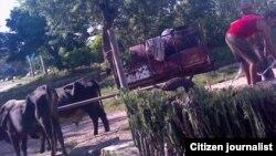 Reporta Cuba sequía Contramestre Foto Yoandris Verane