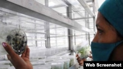 Investigaciones científicas en la agricultura cubana.
