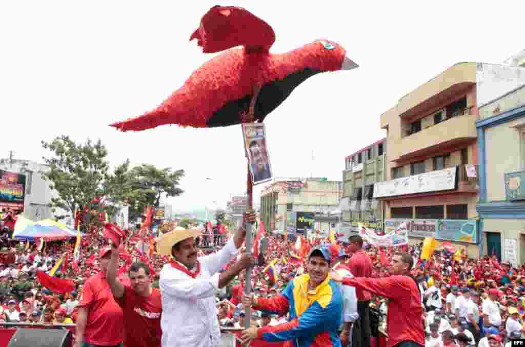 Nicolás Maduro asumió el pájaro chavista como símbolo de Hugo Chávez.