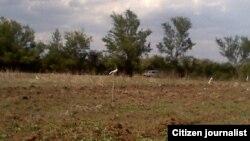 Las tierras ociosas abundan en Cuba. (Archivo)