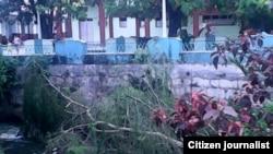 Reporta Cuba. La muerte de otro sauce en la ribera del río Ariguabano.