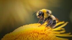 Entre Nosotros: Sentimientos de abeja