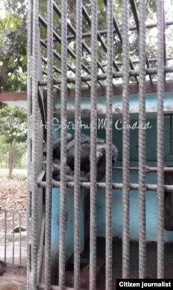 Reporta Cuba. Zoo de Sancti Spíritus. Foto: Facebook.