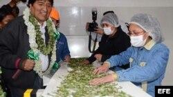 """Evo Morales (i), inauguró el 29 de julio una fábrica de """"bimates"""", hechos con hojas de coca y el edulcorante estevia."""