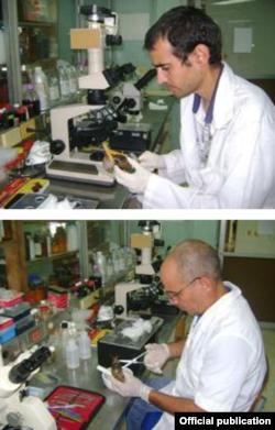 Científicos del IPK examinan muestras del caracol africano. Foto IPK.