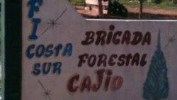 Carboneros de Artemisa se quejan de bajos salarios y pésimas condiciones de trabajo