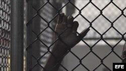 Presos políticos no aceptan condiciones para quedar en libertad
