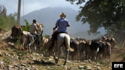 Consideran positivo que campesinos vendan productos a Turismo