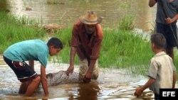 Un grupo de campesinos en campos sembrados de arroz que se encuentran junto a sus viviendas en Cuba.