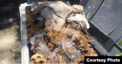Foto de restos humanos en el Cementerio de Colón