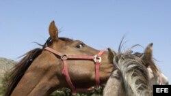 Fotografía de archivo. Cría de caballos. EFE/Paco Torrente