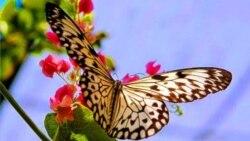 """""""La única flor que tiene alas es la mariposa"""""""