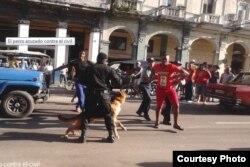 Juliet Michelena fotografió a la policía usando perros contra civiles (Cubanet)