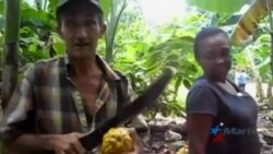 Nuevas tecnologías a la industria del chocolate no benefician al pueblo cubano
