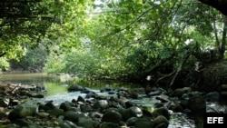 La selva del Darién, limítrofe con Colombia, una de las partes más peligrosas de la travesía de los cubanos que emigran desde Ecuador.