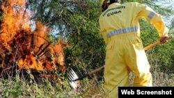 Miembros del Cuerpo de Bomberos combaten incendio forestal