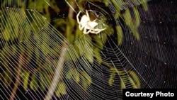 Araña a la espera de su presa (Cortesía Alexmaher)