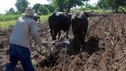 """Gobierno cubano pide a campesinos trabajar más """"pero sin nada a cambio"""""""