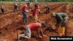 Jóvenes trabajando la tierra en una escuela al campo.