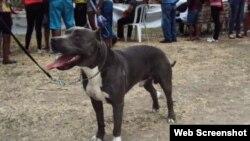 Comentan sobre alta población de perros callejeros en Cuba