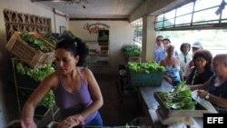 La agricultura de Cuba hoy