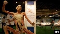 """Cuerpo plastificado de un hombre que practica tai-chi que se muestra en la exposición """"Las maravillas del cuerpo humano""""."""