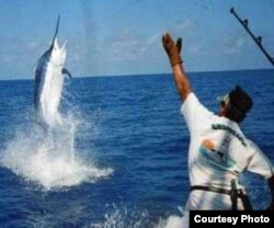 Se espera record de participación de estadounidenses en el torneo Hemingway de pesca de la aguja.