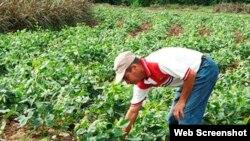 Agroturismo en la provincia de Las Tunas