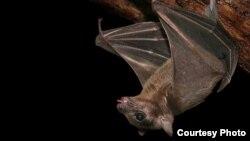 El murciélago, que se come al cocuyo, y no la luz (José Martí)