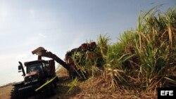 Expertos no concuerdan con metas cubanas para zafra azucarera cubana