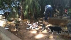 El abuso animal es frecuente en la isla
