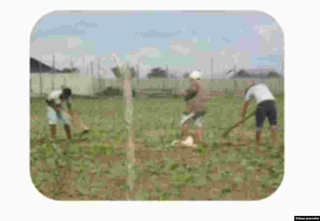 Niños trabajando Reporta Cuba foto de Leodán Suárez