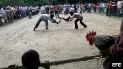 Peleas de gallos en Cuba