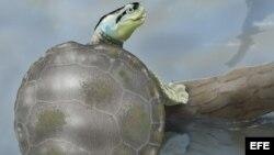 Científicos descubren en Portugal una tortuga Jurásica