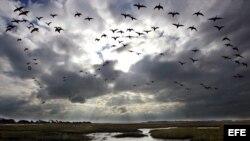 Las aves en el folklore y la magia de Cuba