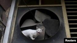 Un gato de la calle en La Habana, en una foto de febrero del 2016.
