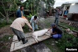 Una familia de campesinos sacrifica un cerdo en Sagua la Grande. REUTERS/Desmond Boylan