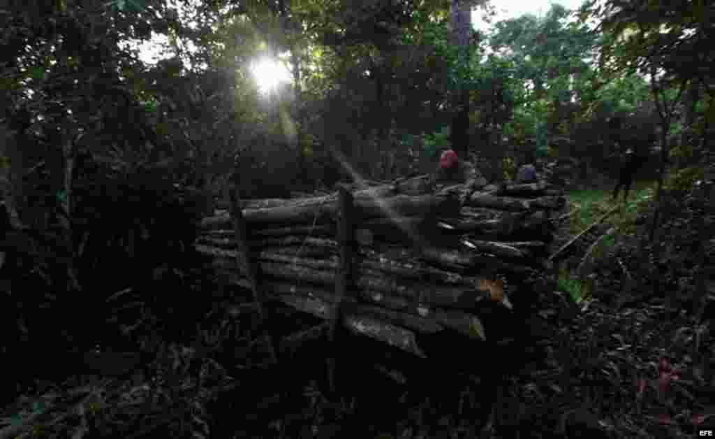 Dos campesinos sacan del monte madera recién cortada para hacer carbón.