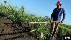 Un campesino limpia un sembrado con un azadón en el municipio del Mariel. EFE