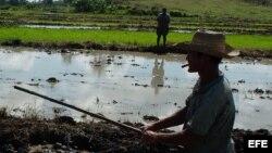 Campesinos cubanos: los obstáculos, las esperanzas