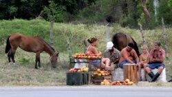 """Agricultores cubanos invitan a ministro Marrero a """"doblar el lomo"""" junto a ellos"""