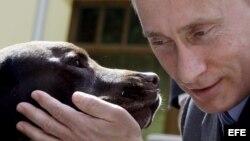 """Vladimir Putin, acaricia a un perro labrador de nombre """"Tonik"""" durante el encuentro con perros rescatistas de Rusia."""