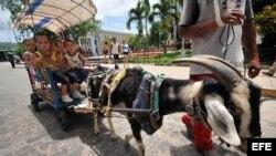 Varios niños pasean en un carretón tirado por un chivo en el Parque Vidal de Santa Clara (Cuba),