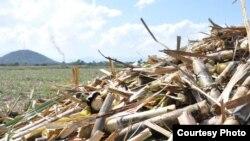 Campos de caña de azúcar en Cuba.