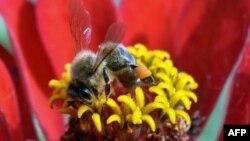 El gobierno propone crear siete millones de acres en terrenos federales más agradables para las abejas.
