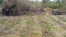 Privilegios y frustraciones en entrega de tierras en usufructo en Cuba