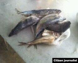 Dieta de pescado para enfermos de SIDA / foto Janny Dachel