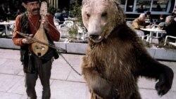 Los osos que bailaban y el cubano