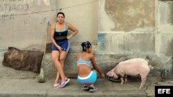 Dos mujeres dan de beber a un cerdo en un barrio de Santiago de Cuba. EFE